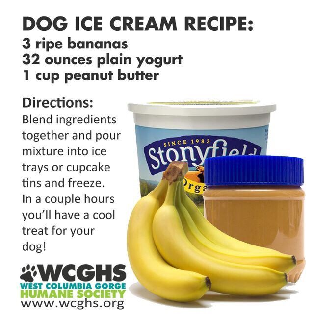 "You cant be too busy to explore this: ""Dog Ice Cream Recipe """
