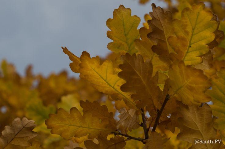 Poke the oak tree.