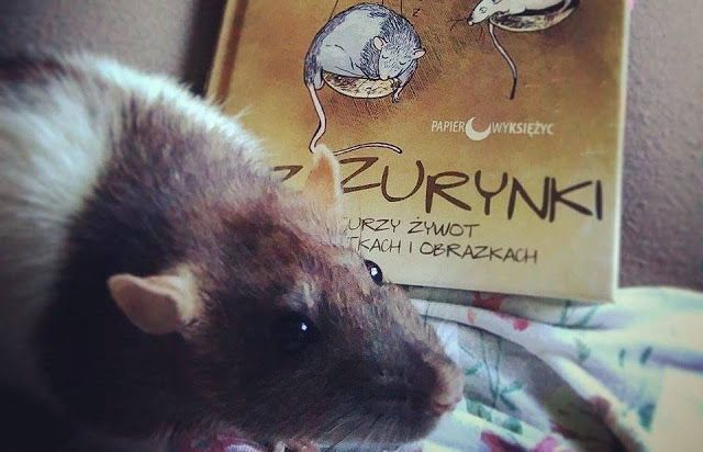 Szczur to najlepszy przyjaciel człowieka - Szczurynki. Szczurzy żywot w opowiastkach i obrazkach - Olga Gromyko