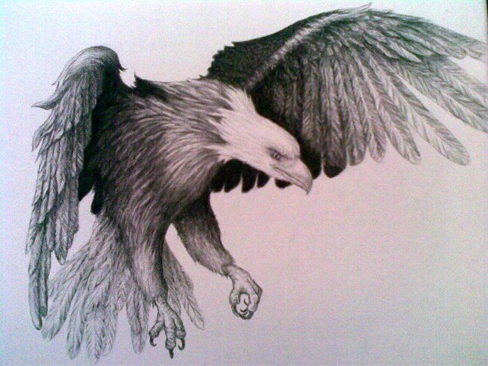 Drawing Eagle of Pencil Sketches | eagle-pencil-drawing ...