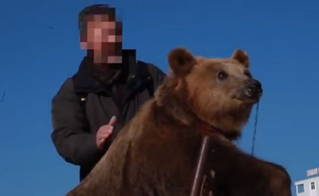 Two More 'Selfie Bears' Rescued After Years Of Suffering | Care2 Causes