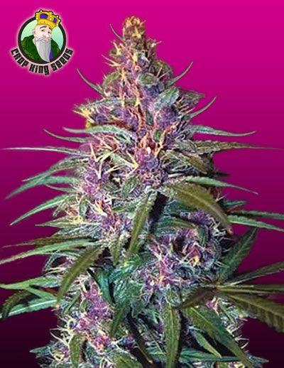 how to make purple kush turn purple