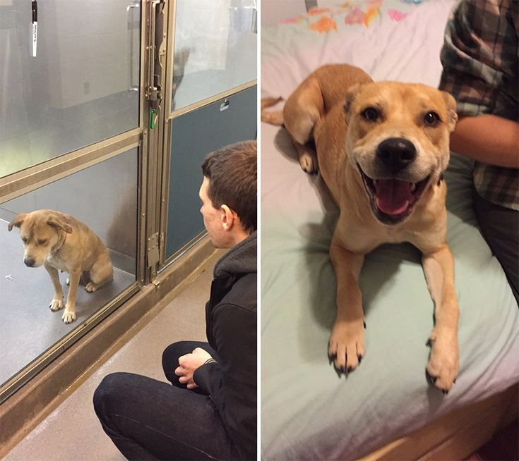 These heartwarming before and after photos show just how much the day of adoption can mean to a shelter pet.