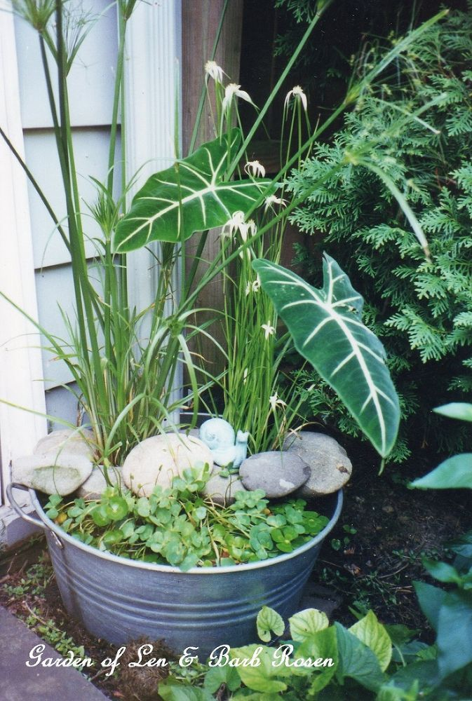 DIY ~ Create Your Own Water Garden In A Container!