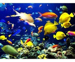 Sharm Marina Tours   Sharm Marina Excursions   St. Catherine Trips from Sharm M    via Tumblr