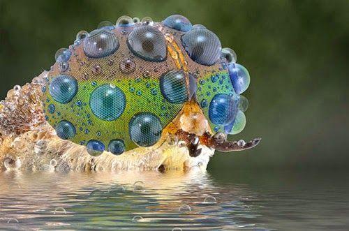 昆虫の目「複眼」を実に克明にまるでCGのようにマクロ撮影した。