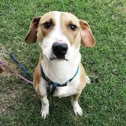 Available Pets At Fort Worth Animal Care Control Center In Fort