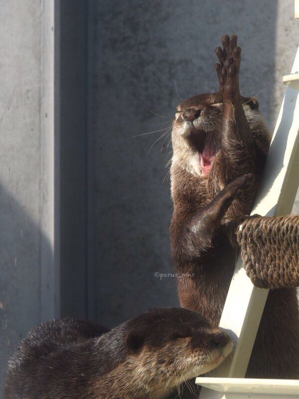 Maggie loves otters : Photo