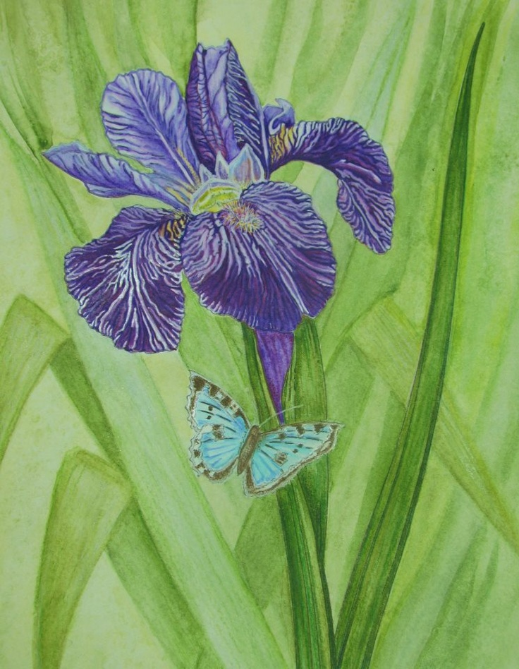 Jules Cote 18 Division From Redoute Flowers Coloring Book Watercolor Pencils And Colored Pencil