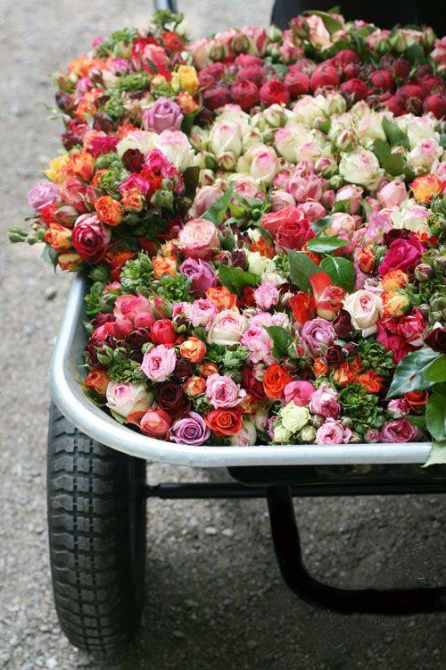 wagon full of roses.Beautiful Flower, Rose, Flower Planters, Colors, Flower Gardens, You, Fresh Flower, Floral,  Flowerpot