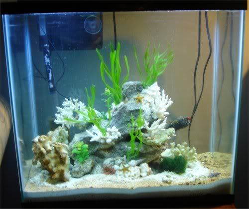 17 best images about animals seahorses on pinterest for Seahorse fish tank