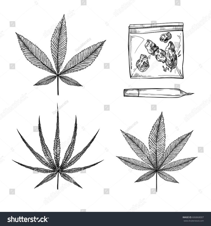 Hand drawn vintage vector illustrations - Medical cannabis, Indica, ruderalis, sativa. Marijuana sketch. Perfect for invitations, greeting cards, posters, prints