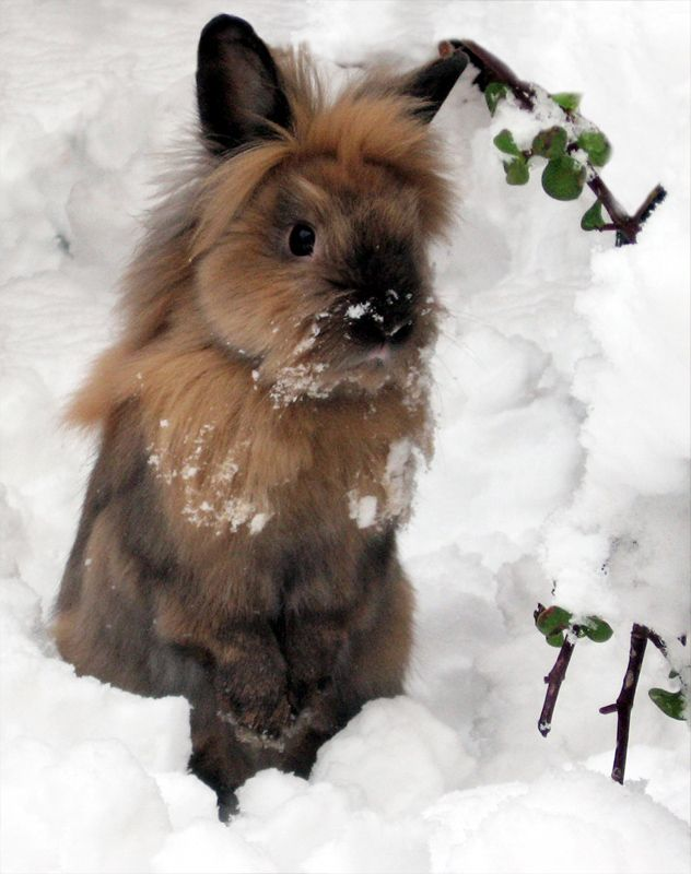 How do I get my parents to let me get a bunny?
