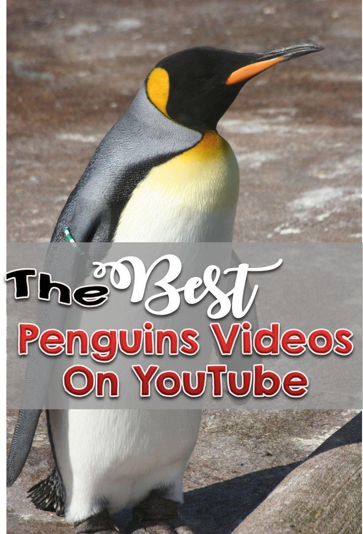 best teaching penguins images on pinterest winter penguins