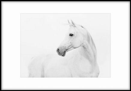 White horse, posters i gruppen Posters och prints hos Desenio AB (7641) 50x70 cm 229 kr Desenio