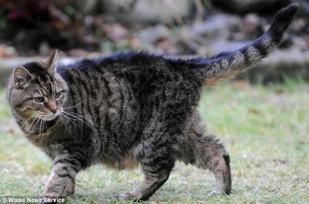 Lucy, 39, may be the world's oldest cat. That's the equivalency of 172 human years!