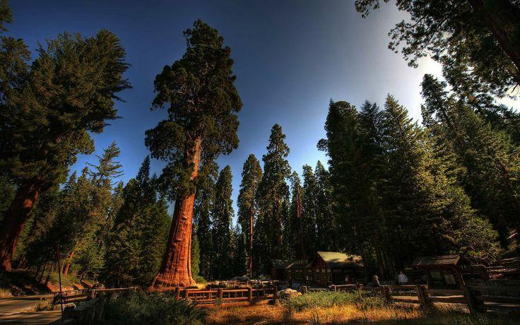 Sequoia National Park: cosa vedere nel parco delle gigantesche sequoie in California.  http://www.viaggi-usa.it/sequoia-national-park/
