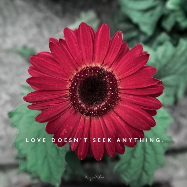 LOVE doesn't seek anything. ~ Byron Katie Quote