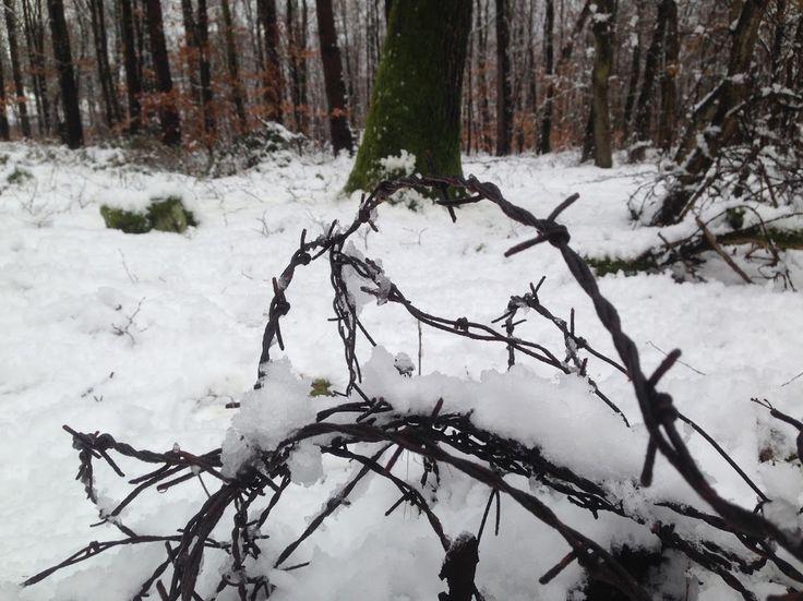 A Sopron közeli erdőket már hó borítja   Cyberpress