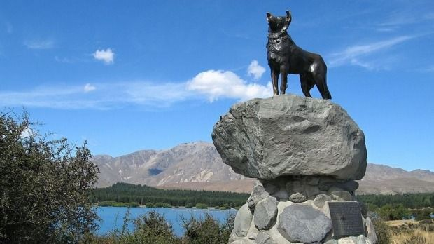 In towns all over the country there are monuments to brave, loyal and hard-working dogs.