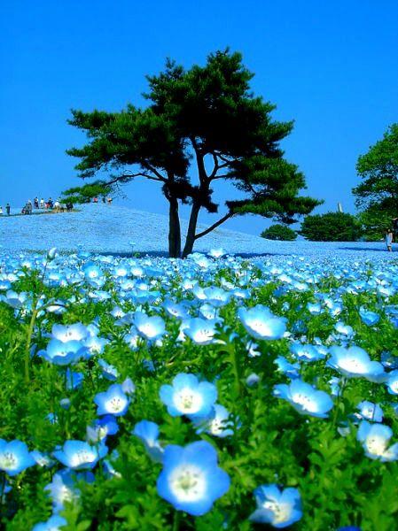 Voir la vie en bleue I #Japon I