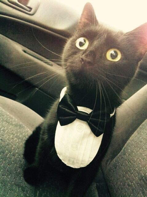 79 Best Men Amp Animals In Tuxedos Amp Suits Images On