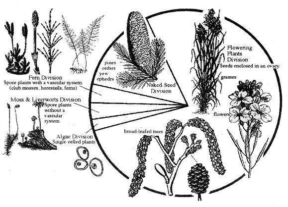 Free High School Botany Curriculum Free Curric Pinterest