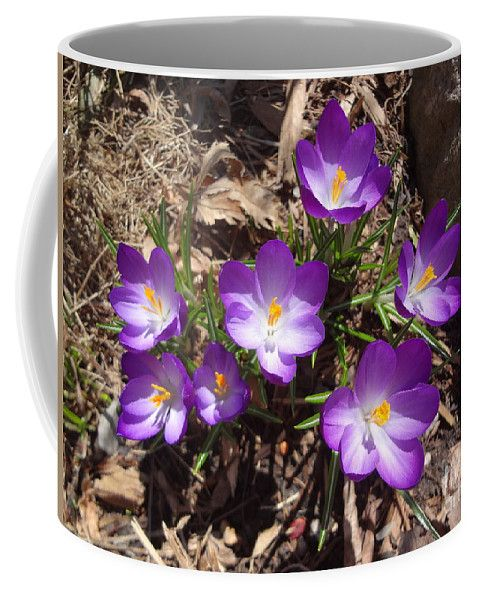 Crocus Coffee Mug featuring the photograph Crocus Purple by Lyssjart Sj