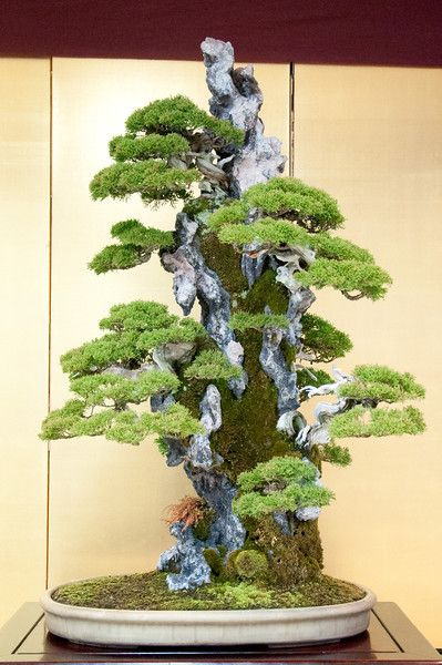 Shimpaku rock planting - the little trees look just like they're growing on a real mountain side.