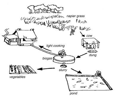 172 best images about aquaponie on pinterest gardens for Design of farm pond pdf
