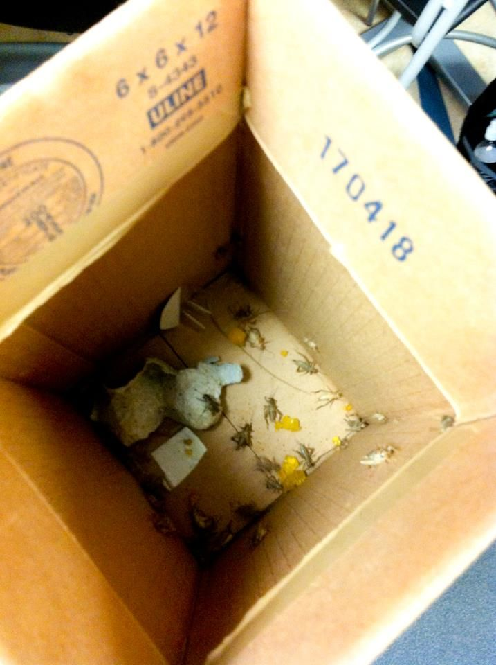 Fear Factor Ideas: Have a box full of crickets and a bunch of objects that need to be removed. Creepy!