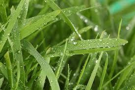 Yo vi en las hojas temblando las frescas lluvias de abril.
