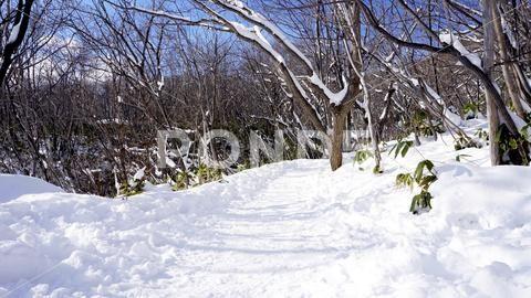 Snow and walkway in the forest Noboribetsu onsen s…