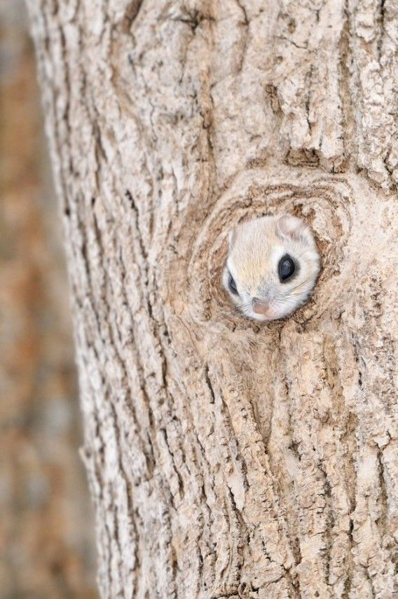 """When I first saw this I thought, """"Wow, what a funny looking knot in that tree."""" Baaaaaahahahahahahahahaha"""
