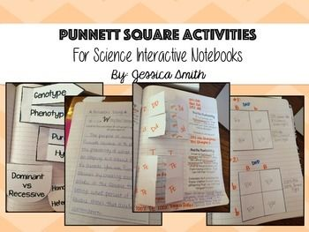 Punnett Square Science Interactive Notebook Activities