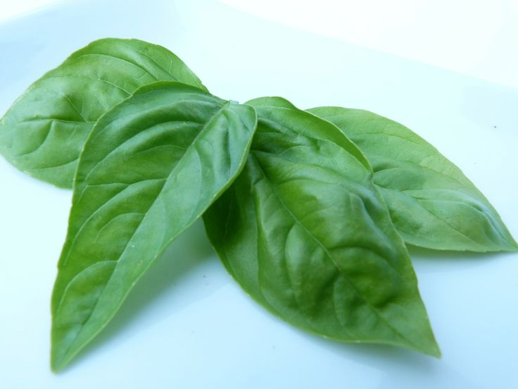 Why Basil is a holy herb for a healthy body and soul