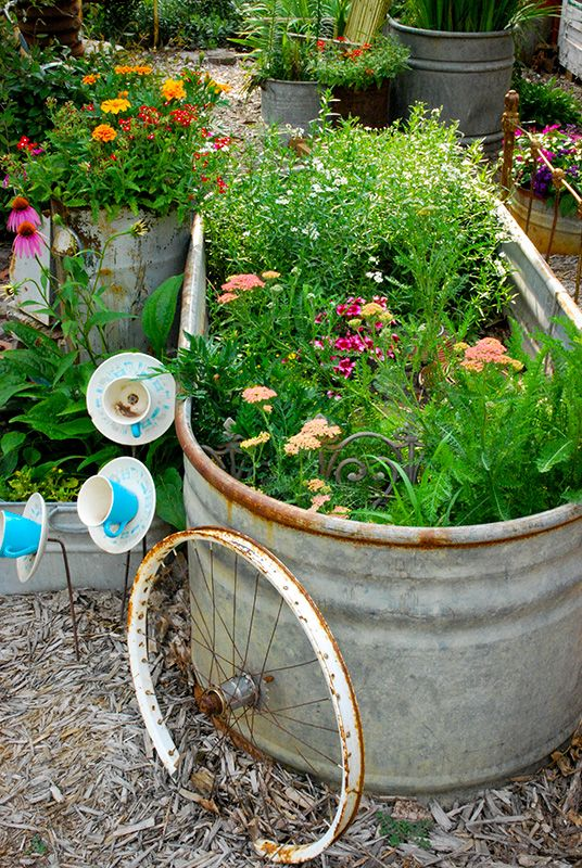 I love that galvanized tub but those cup & saucer flowers are adorable.