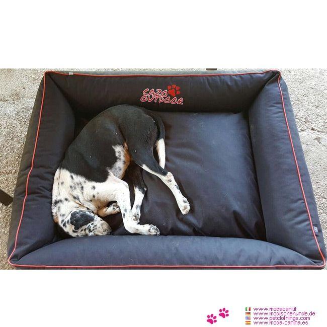 Oltre 25 fantastiche idee su cucce per animali domestici for Cuccia cane taglia grande