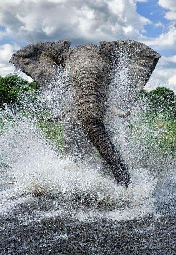 Best Splash Ever!