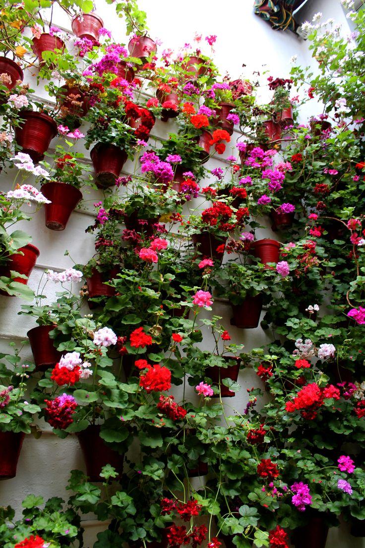 #sol #ceremonia #concursos #cruces #crucesdemayo #flores #patios #patiosdecórdoba #tradición #mayo #mayocordobés #cordoba #andalucia