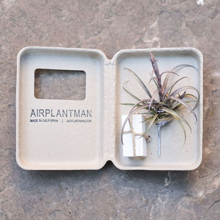 Airplantman sells sustainable plants with sustainable packaging. Josh Rosen uses Sustainable Packaging Industries for all of his unique airplant sculpture designs! Airplantman:https://airplantman.myshopify.com/