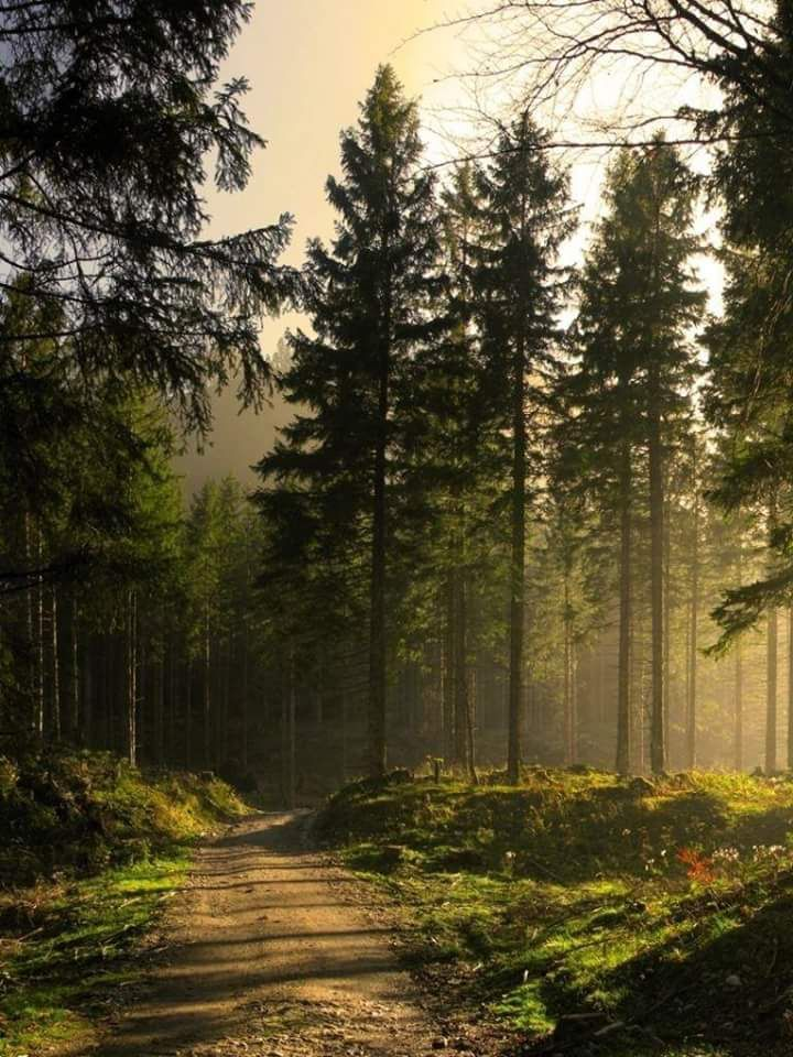Woodland Forest Background