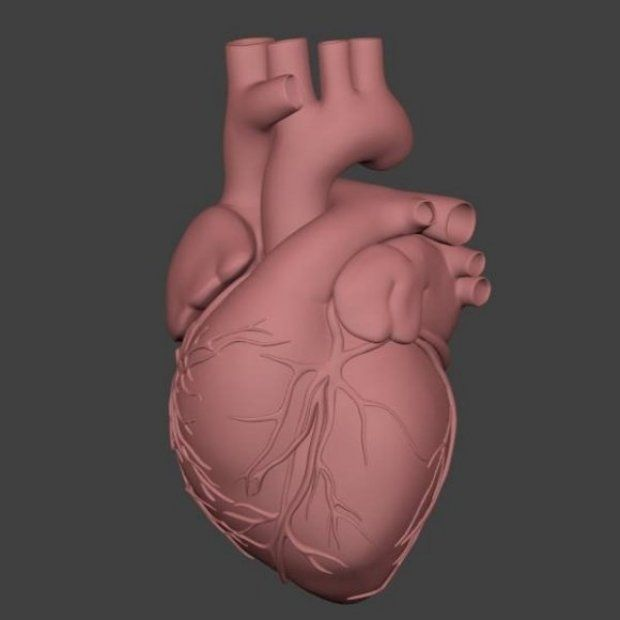 25+ best Heart images by Jessica Mayer on Pinterest | Heart anatomy ...