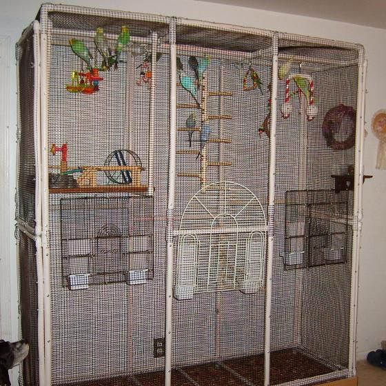 PVC Parakeet bird cage/condo made out of PVC pipe and fittings.  My next pvc project.