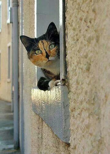 Cat behind window