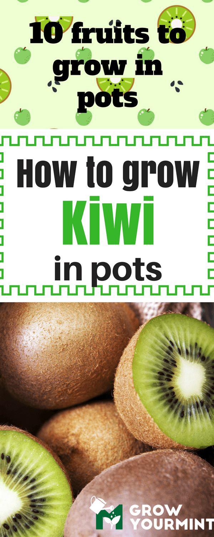 10 Fruits To Grow In Pots So That A Fresh Juice Is Always Close  #kiwi#fruit#garden#gardening#growyourmint.com