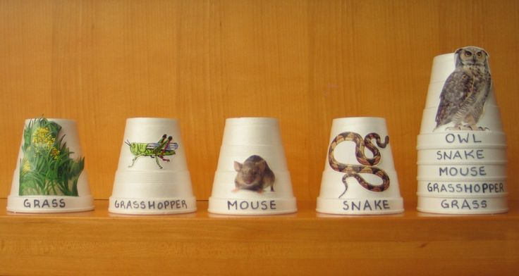 Food Chain Stacking Cups - make this for the nature center out of nice cups - mod podge photo images recycled from magazines