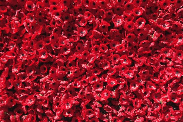 anzac day poppy flowers for celebration