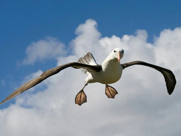 Spread the love like an albatross spreads his wings! #albatross