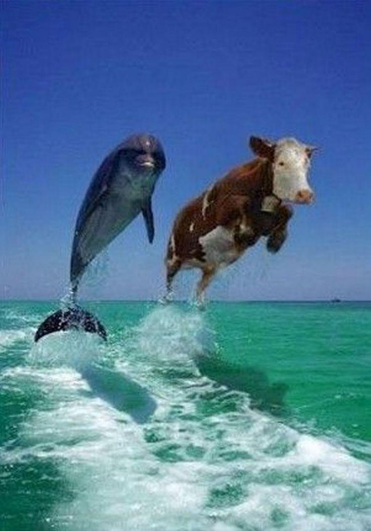 delfines.jpg (1117×1600)